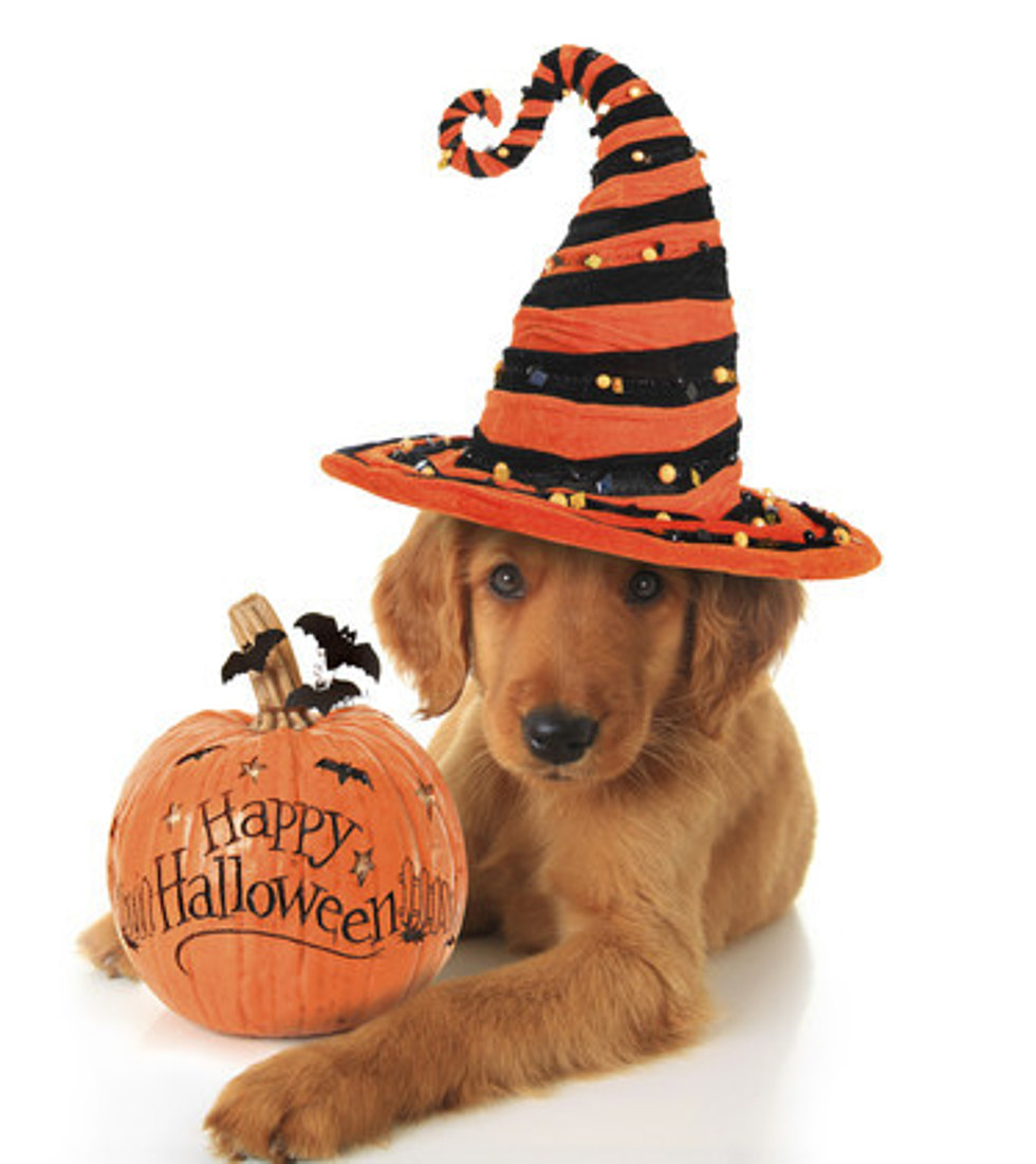 halloween costumes ideas for your pets